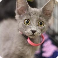 Adopt A Pet :: Daisy - Sacramento, CA