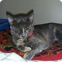 Adopt A Pet :: Madeline - Hamburg, NY