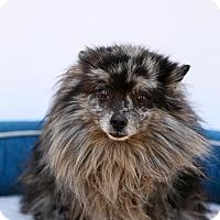 Adopt A Pet :: Freckles - Auburn, CA