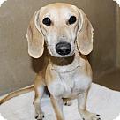 Adopt A Pet :: 23081 Dakota