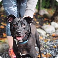 Adopt A Pet :: Zeke - Whitehall, PA