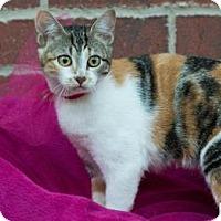 Adopt A Pet :: Lily - Santa Fe, TX