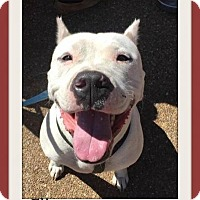 Adopt A Pet :: Flint - Memphis, TN