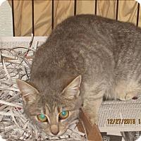 Adopt A Pet :: 16-12-3877c - Dallas, GA