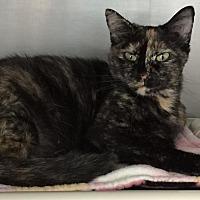 Adopt A Pet :: Lola - Topeka, KS