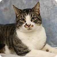 Adopt A Pet :: Ralph - STRAY - Midland, MI