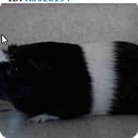 Adopt A Pet :: *Urgent* Oliver - Fullerton, CA