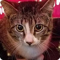 Adopt A Pet :: Fuzzie - Paducah, KY
