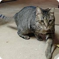 Adopt A Pet :: Juliet - Athens, GA