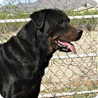 Adopt A Pet :: Romeo - San Tan Valley, AZ