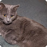 Adopt A Pet :: zz 'Zane' Courtesy Post - Cincinnati, OH