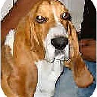 Adopt A Pet :: Ebenezer - Phoenix, AZ