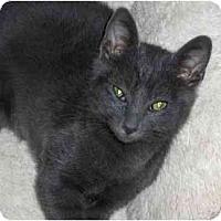 Adopt A Pet :: Leo - Richmond, VA