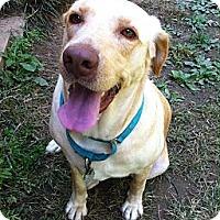 Adopt A Pet :: Hubert - Nashville, TN