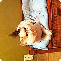Adopt A Pet :: Mariah - Simpsonville, SC
