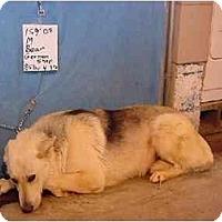 Adopt A Pet :: Bear/Pending - Zanesville, OH