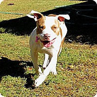 Adopt A Pet :: MR. WIGGINS - Phoenix, AZ