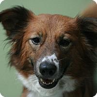 Adopt A Pet :: Lovey - Canoga Park, CA