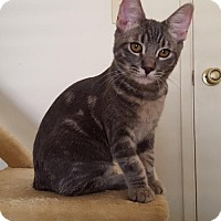 Adopt A Pet :: Juliet **Lease for Life** - Glendale, AZ