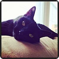 Adopt A Pet :: Bijou (Courtesy Listing) - Encinitas, CA
