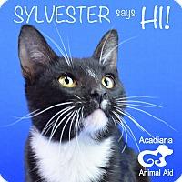 Adopt A Pet :: Sylvester - Carencro, LA