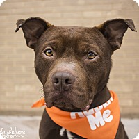 Pit Bull Terrier Mix Dog for adoption in Mooresville, North Carolina - Drake