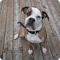 Adopt A Pet :: Lola - Drumbo, ON