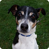 Adopt A Pet :: Spike Little - Grayslake, IL