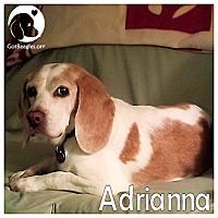 Adopt A Pet :: Adrianna - Chicago, IL