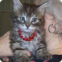 Adopt A Pet :: Kit Kat - Picayune, MS