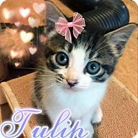Adopt A Pet :: Tulip - Hampton, VA