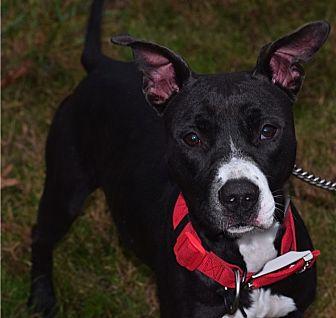 Terrier (Unknown Type, Medium) Mix Dog for adoption in Mount Ida, Arkansas - Molly Bee
