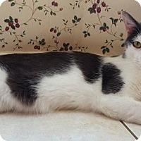 Adopt A Pet :: Charming - DFW Metroplex, TX