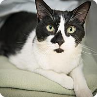 Adopt A Pet :: Sawyer - New York, NY
