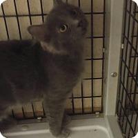 Adopt A Pet :: Lisa - Muscatine, IA