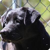 Adopt A Pet :: Mina - Baltimore, MD