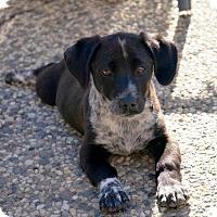 Adopt A Pet :: Benny - San Jose, CA
