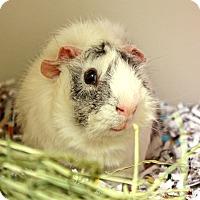 Adopt A Pet :: Walter - Harrisonburg, VA