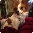 Adopt A Pet :: Oliver (in New Jersey)