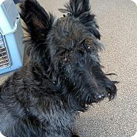 Adopt A Pet :: Brenna - San Diego, CA
