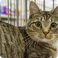 Adopt A Pet :: Eggo - Millersville, MD