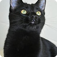 Adopt A Pet :: Diamond - Aiken, SC