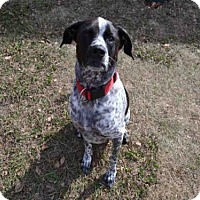 Adopt A Pet :: CHRISTIAN - Plano, TX