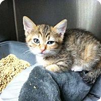 Adopt A Pet :: Sunshine - Ft. Lauderdale, FL