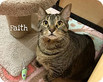 Domestic Shorthair Cat for adoption in Foothill Ranch, California - Faith