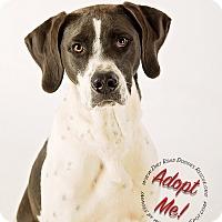 Adopt A Pet :: Liam - Gillsville, GA