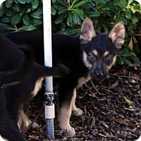 Adopt A Pet :: Arturo - San Diego, CA