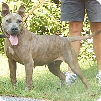 Pit Bull Terrier Mix Dog for adoption in Newport, North Carolina - Autumn