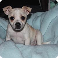 Adopt A Pet :: Einstein - Henderson, NV