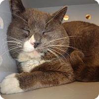 Adopt A Pet :: 335408 - Wildomar, CA